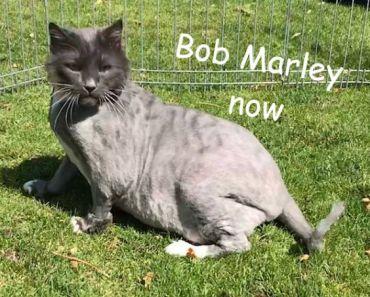 Une personne a déposé un chat dans un état déplorable dans un refuge dans la nuit mais une fois le poil rasé ils ont découvert une vraie beauté