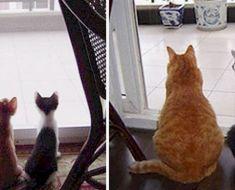 19 photos avant et après de chats qui prouvent qu'au fond, ils resteront toujours des chatons