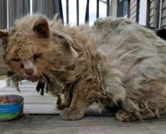 Ce chat errant malade et sale s'est complètement transformé en une seule journée