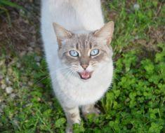 Votre chat essaie vraiment de vous parler, selon la science