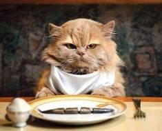 5 signes qu'il est temps de changer la nourriture de votre chat