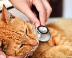 9 signes que votre chat peut être malade