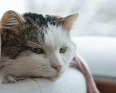 Chat malade : les signes et symptômes qui doivent inquiéter