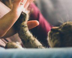 7 raisons d'être une femme chat est bonne pour la santé