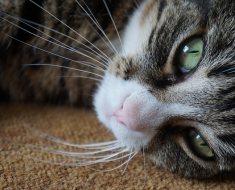 9 signes que votre chat vous aime réellement
