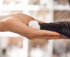 3 façons incroyables d'honorer un chat décédé