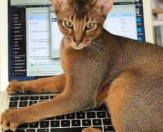 7 raisons pour lesquelles les chats font de meilleurs collègues que les humains
