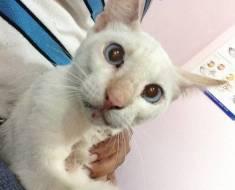 Un homme voit un chat blessé sur une autoroute et refuse de le laisser mourir