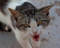 6 signes d'avertissement que votre chat est déprimé