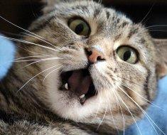 5 choses que vos chats aimeraient pouvoir vous dire