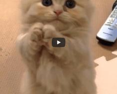 Ce chaton en train de jouer va faire fondre votre cœur en quelques secondes