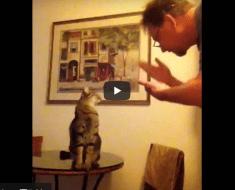 Cet homme et son chat sourd communiquent entre eux avec la langue des signes