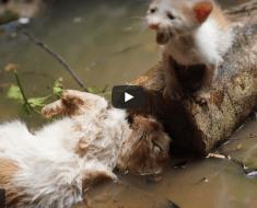 Le pauvre chaton a trouvé sa mère mais n'a pas pu le sauver