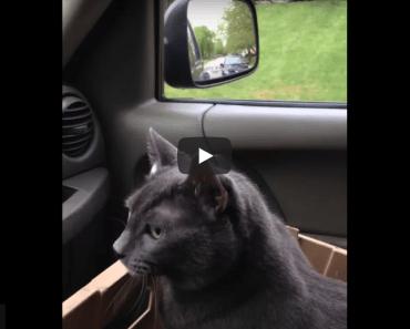 """Le chat a peur et dit """" on y va ? """" alors que nous allons chez le vétérinaire"""