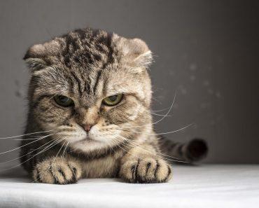 12 choses que votre chat déteste chez vous
