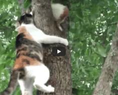 Ce chaton dans l'arbre ne sachant pas comment redescendre, appelle la mère chat à l'aide
