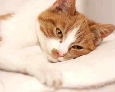 15 signes que votre chat peut être malade