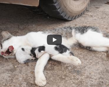 Deux pauvres chatons essayant d'attendre que quelqu'un sauve sa mère
