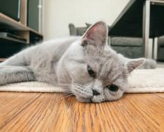 5 signes que votre chat s'ennuie