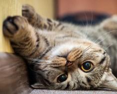 5 raisons pour lesquelles votre chat ne dort pas avec vous