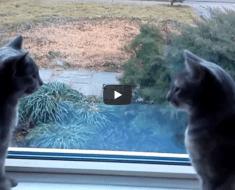 Deux chats parlent juste des oiseaux un autre jour paresseux