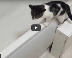 Le chaton mignon adore l'eau du bain, c'est tellement adorable !