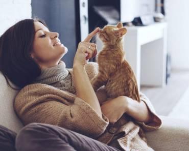 16 façons de comprendre ce que votre chat vous dit ?