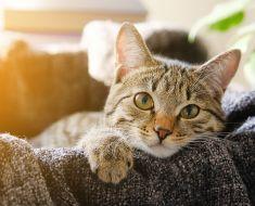 10 façons surprenantes dont votre chat montre de l'affection