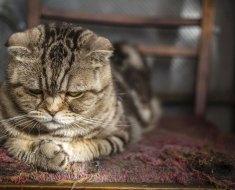 Comment aider un chat stressé : 4 astuces selon un expert