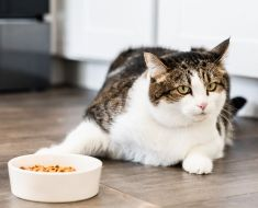 15 aliments humains toxiques que vous ne devriez jamais donner à votre chat