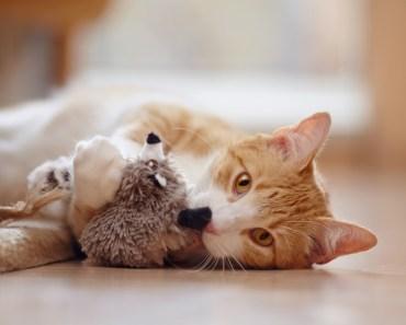 Avec quoi les chats aiment-ils jouer ?