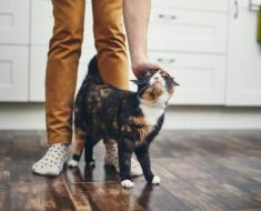 Pourquoi les chats se frottent-ils contre vous ?