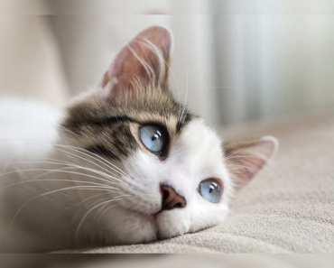 8 choses que votre chat aime