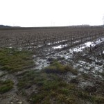 Wine trees in the water