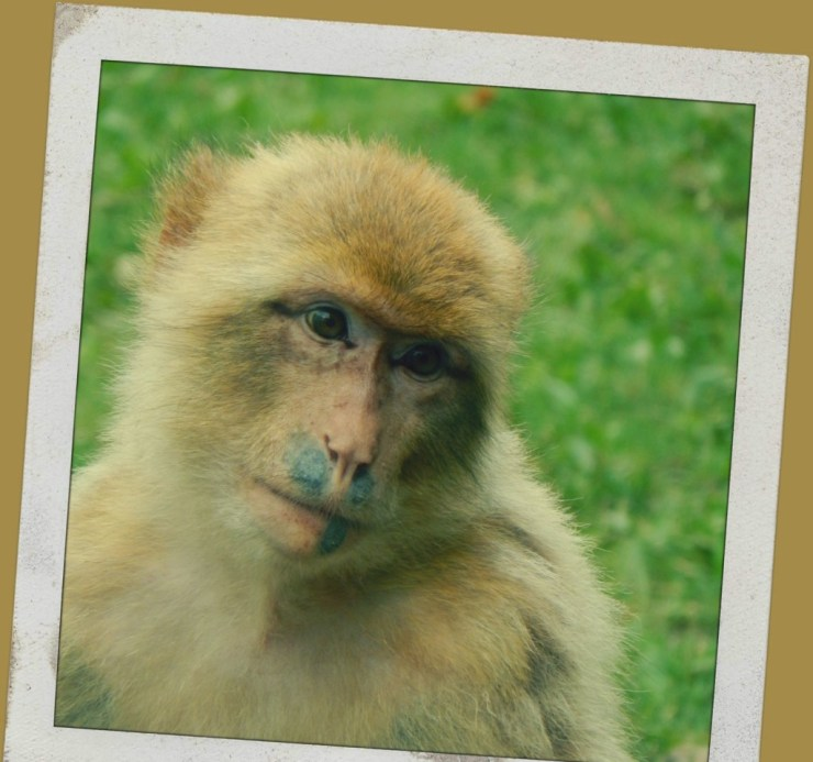 ZooParc de Beauval Variety of Monkeys