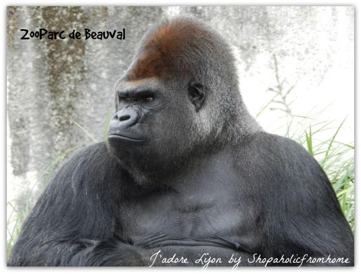 ZooParc de Beauval Gorillaz