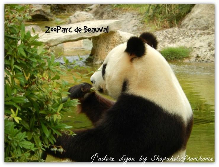 ZooParc de Beauval Panda