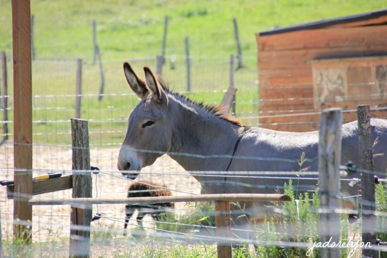 Say hello to the donkey, caress the little piglet at the pedagogical farm near Lyon