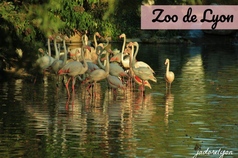 Zoo de Lyon,