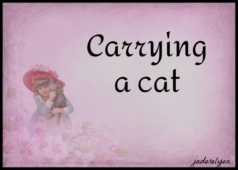 Carrying a cat.