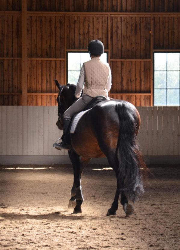 Jädra häst