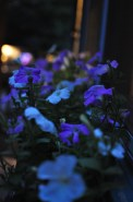 Evening (8 pm)