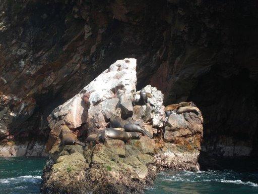 800px-Islas_Ballestas