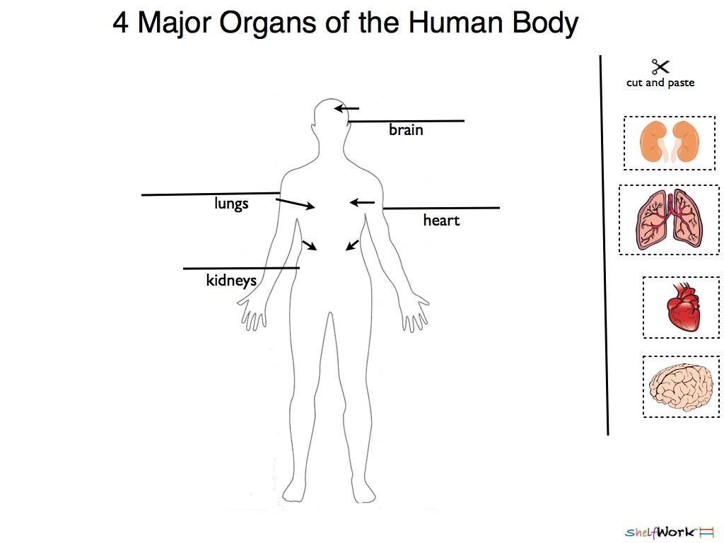 Cells Human Body Printable Worksheet
