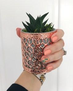 cactus mani rolex jcrew