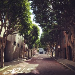 green trees lining a small street
