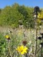 Fall Glory Flowers