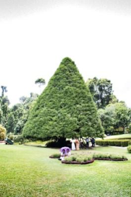 Botanischer Garten, Kandy