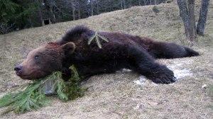 Jagen in Rumänien