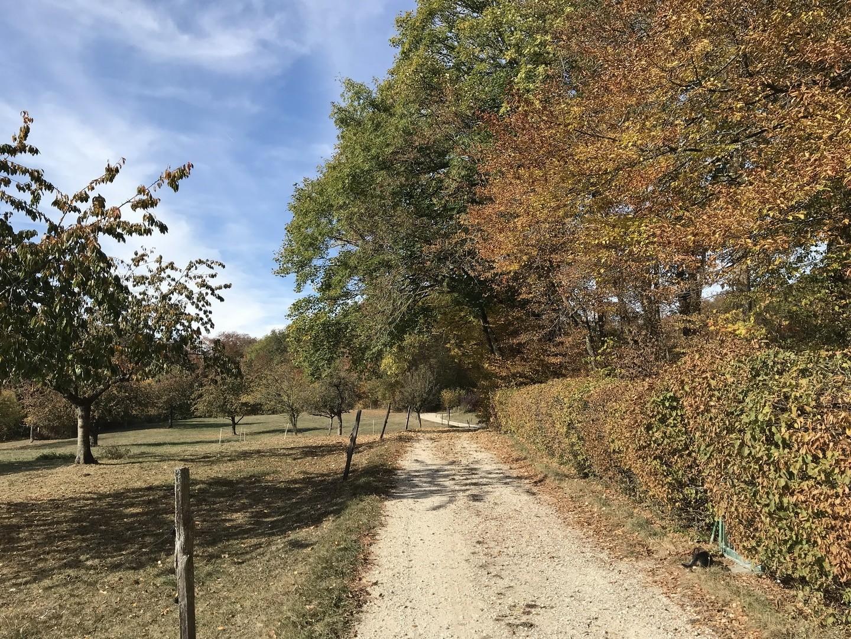 Gempen - Dornach